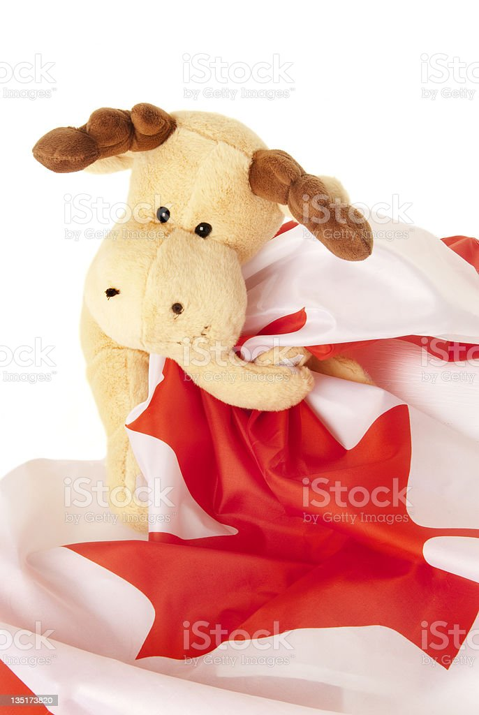 moose holding a Canadian flag stock photo