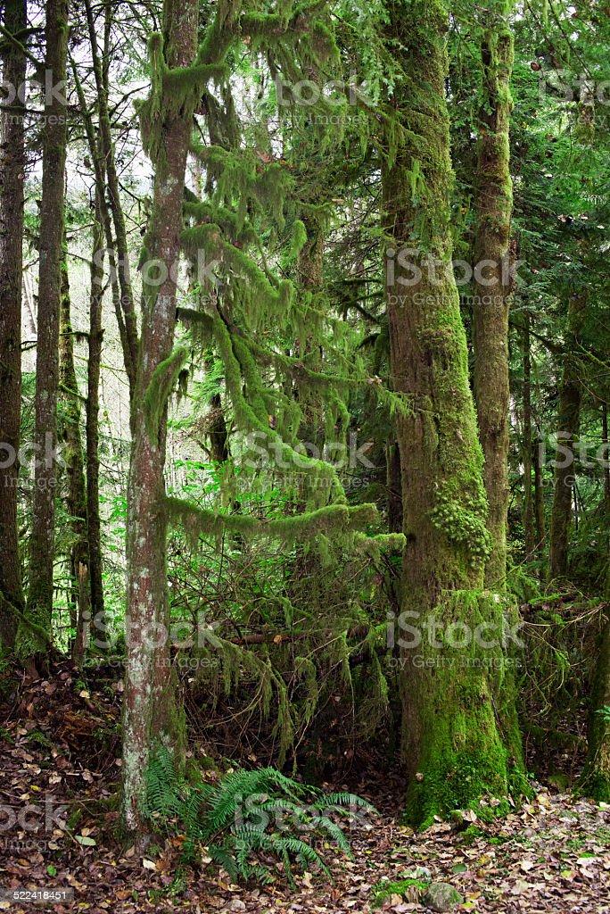 Moosed trees stock photo