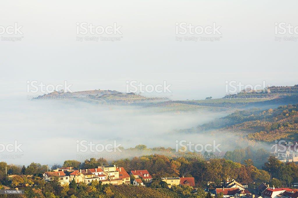 Moravian vineyards (Czech Republic) stock photo
