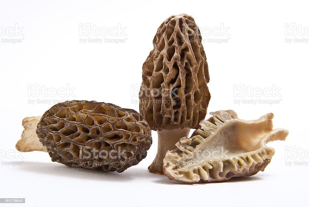 Morchelgruppe auf weiss stock photo