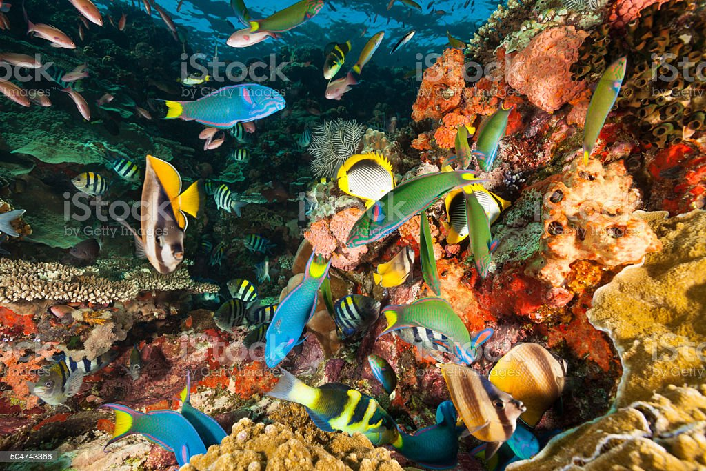 More Fish Than Water! Reef in Komodo National Park, Indonesia stock photo