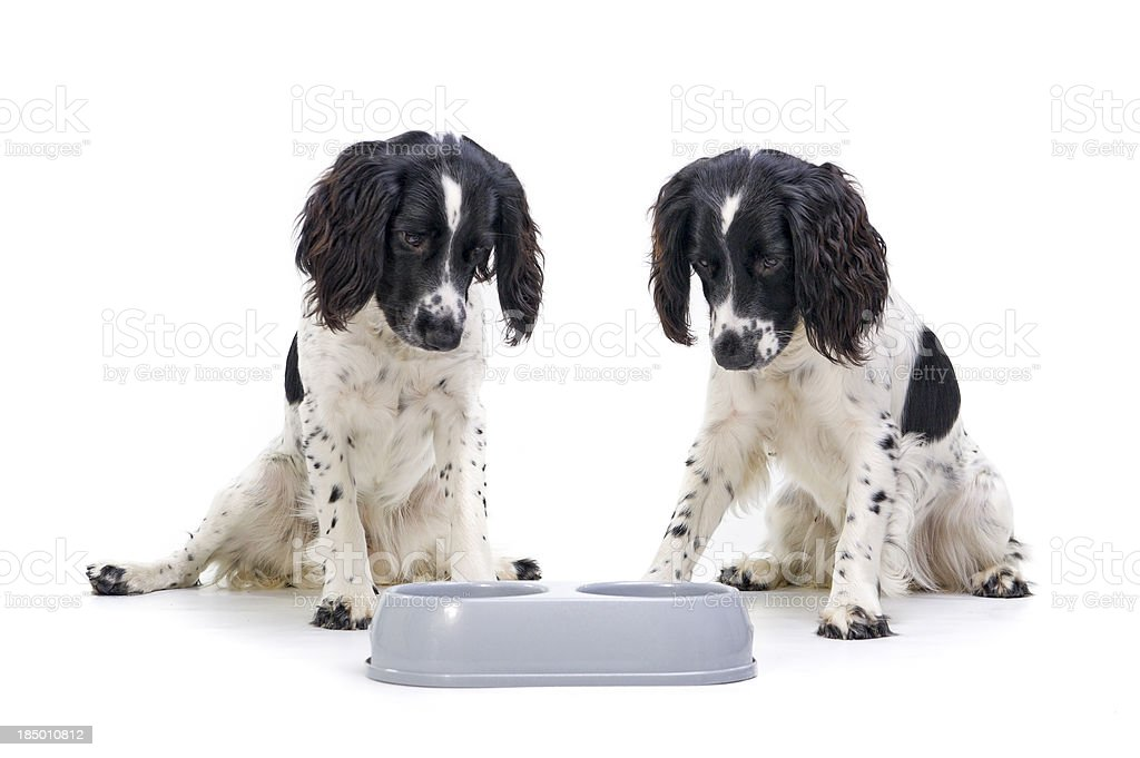 More please! stock photo