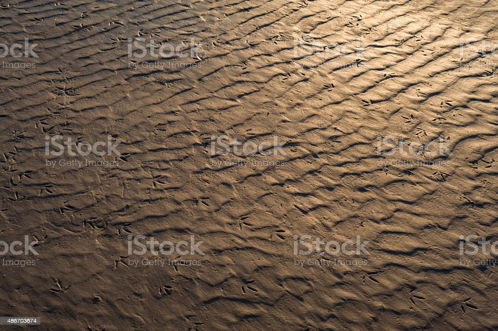 Morecambe Bay: Sand ripples lit by the setting sun stock photo