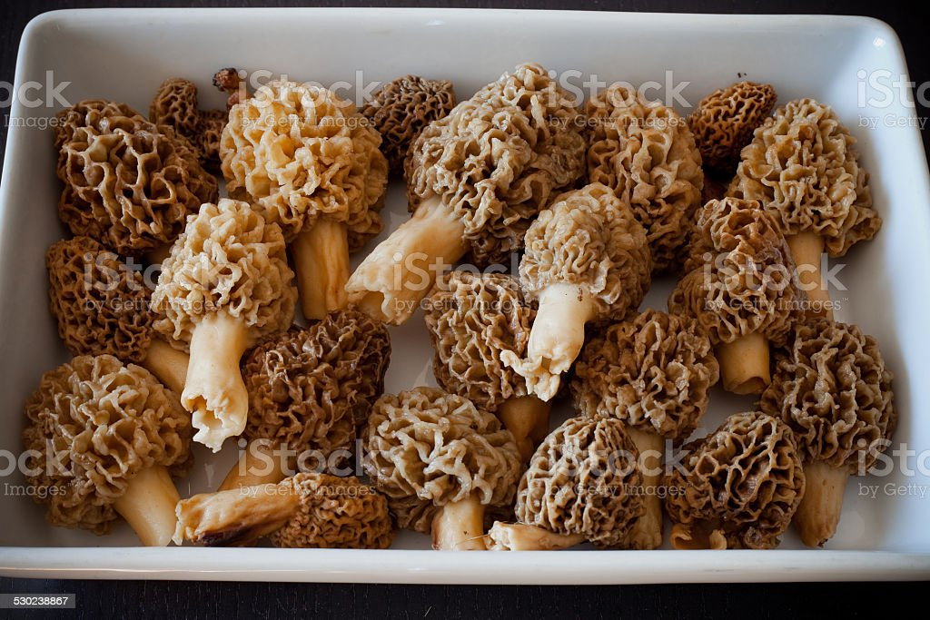 Morel Mushrooms in a dish stock photo