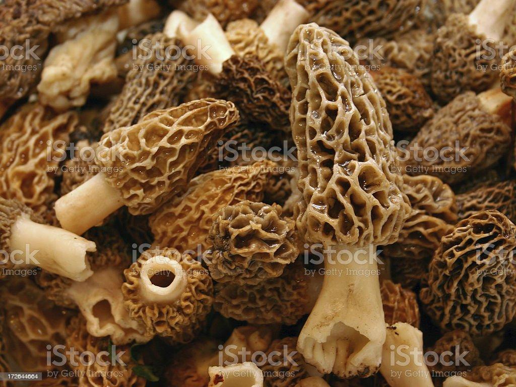 Morel Mushrooms stock photo