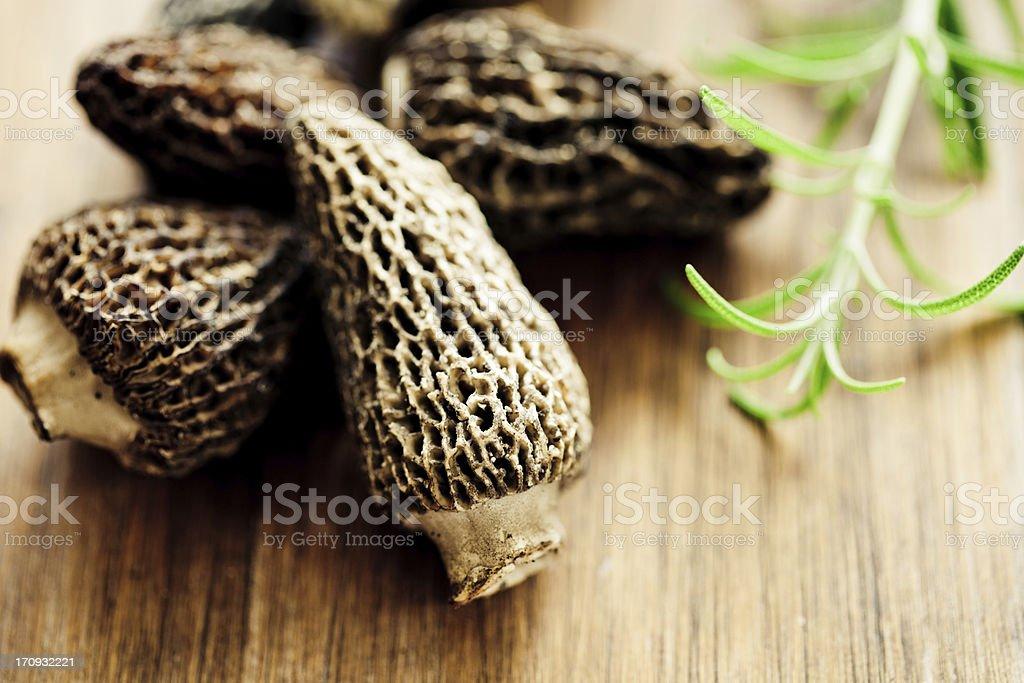 Morilles or Morel Mushrooms royalty-free stock photo