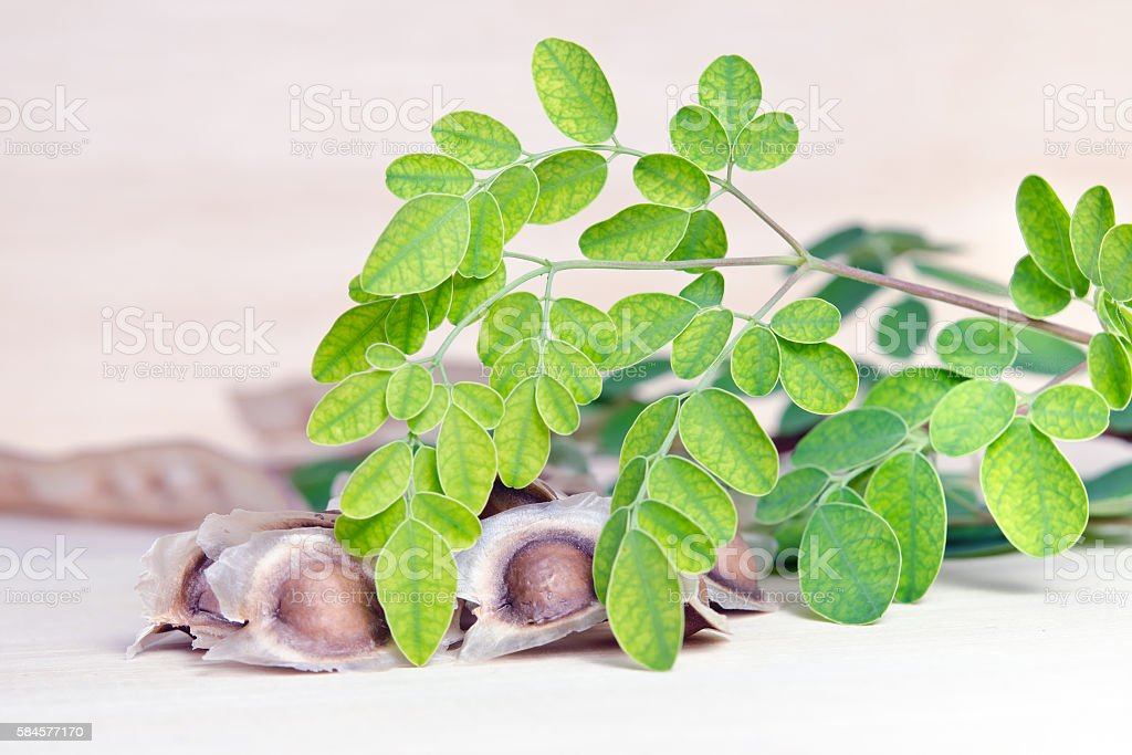 Moringa leaf and Moringa seed on wooden board background stock photo
