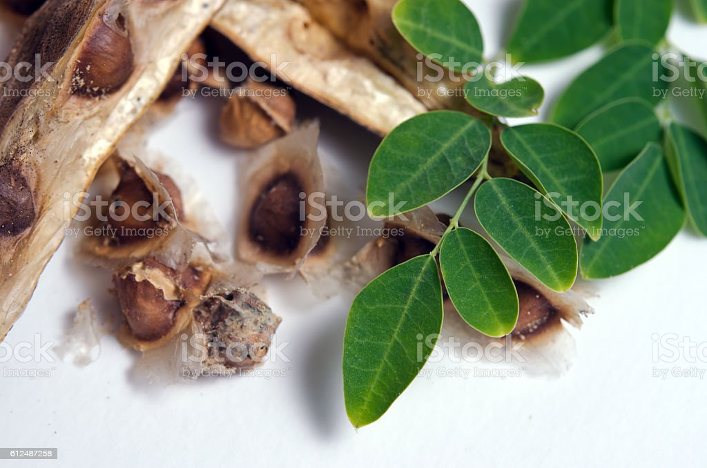 Moringa leaf and seed on white background stock photo