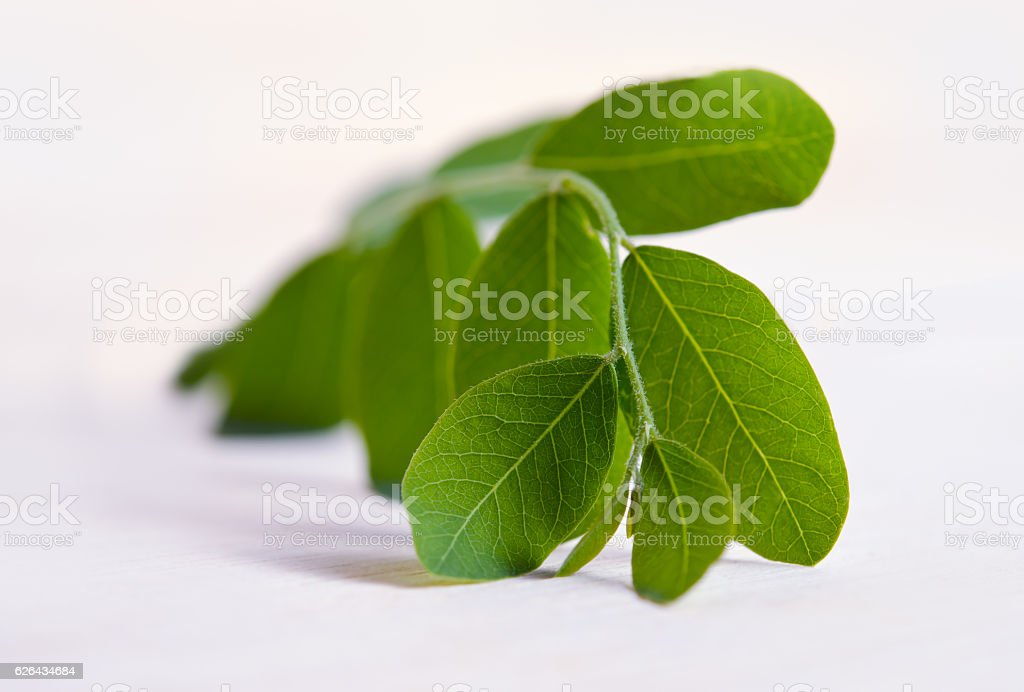 Moringa leaf isolated on wooden board background stock photo