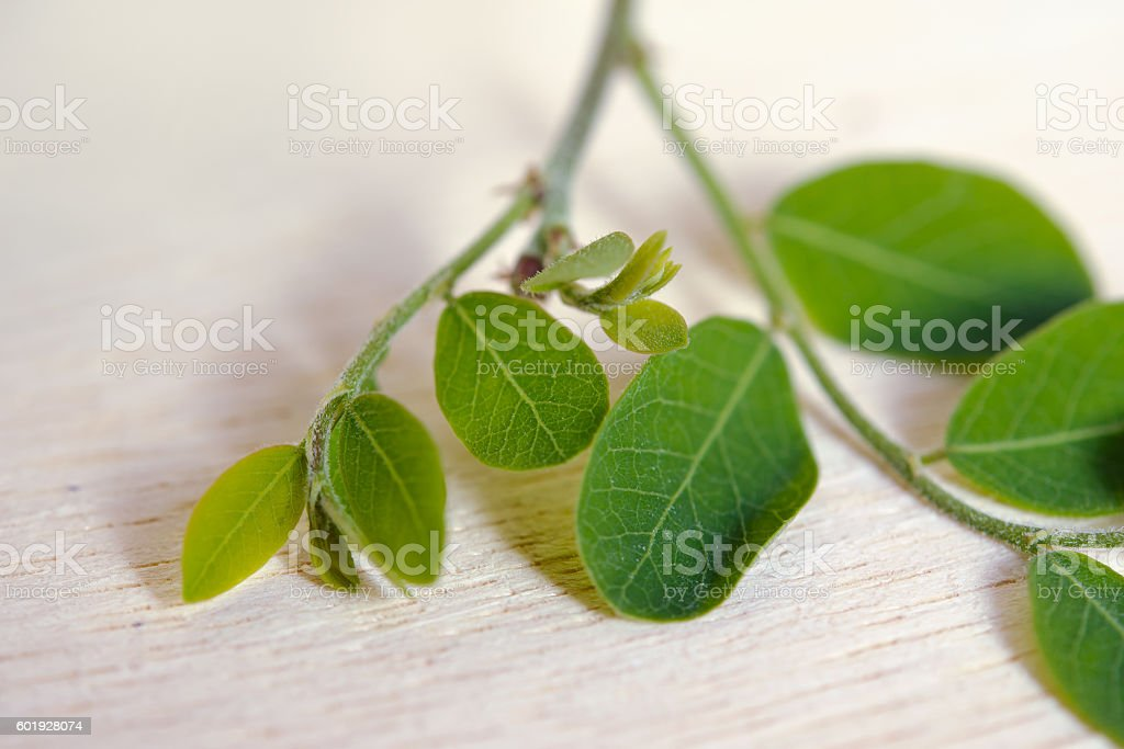 Moringa leaf on wooden board background stock photo