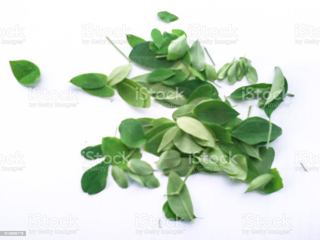 Moringa leaves on a white background stock photo