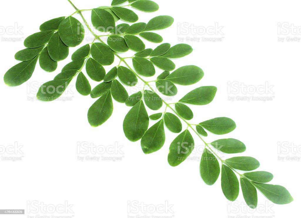 Moringa feuilles photo libre de droits