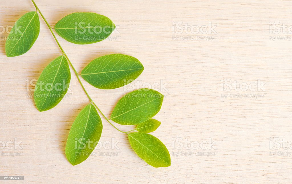 Moringa plant leaf isolated on wooden board background blank space stock photo