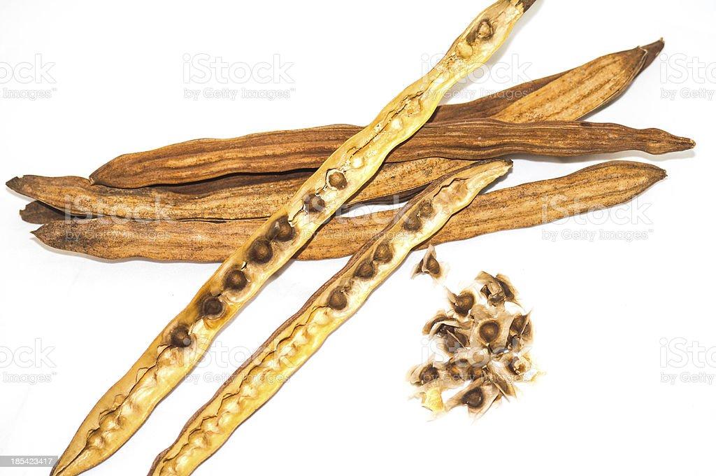 Moringa seed royalty-free stock photo