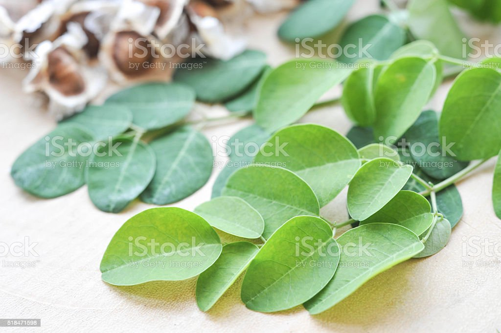 Moringa seeds with leaves in natural light stock photo