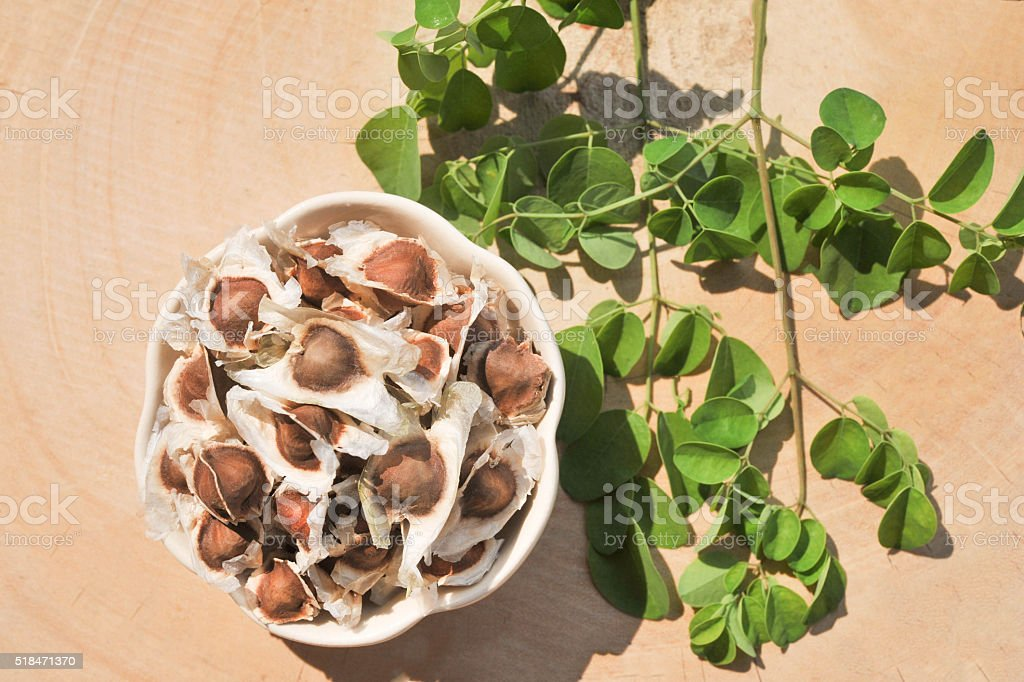 Moringa seeds with leaves stock photo