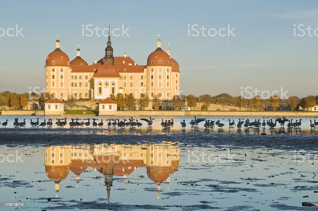 Moritzburg castle near Dresden in Germany, greylags on the water stock photo