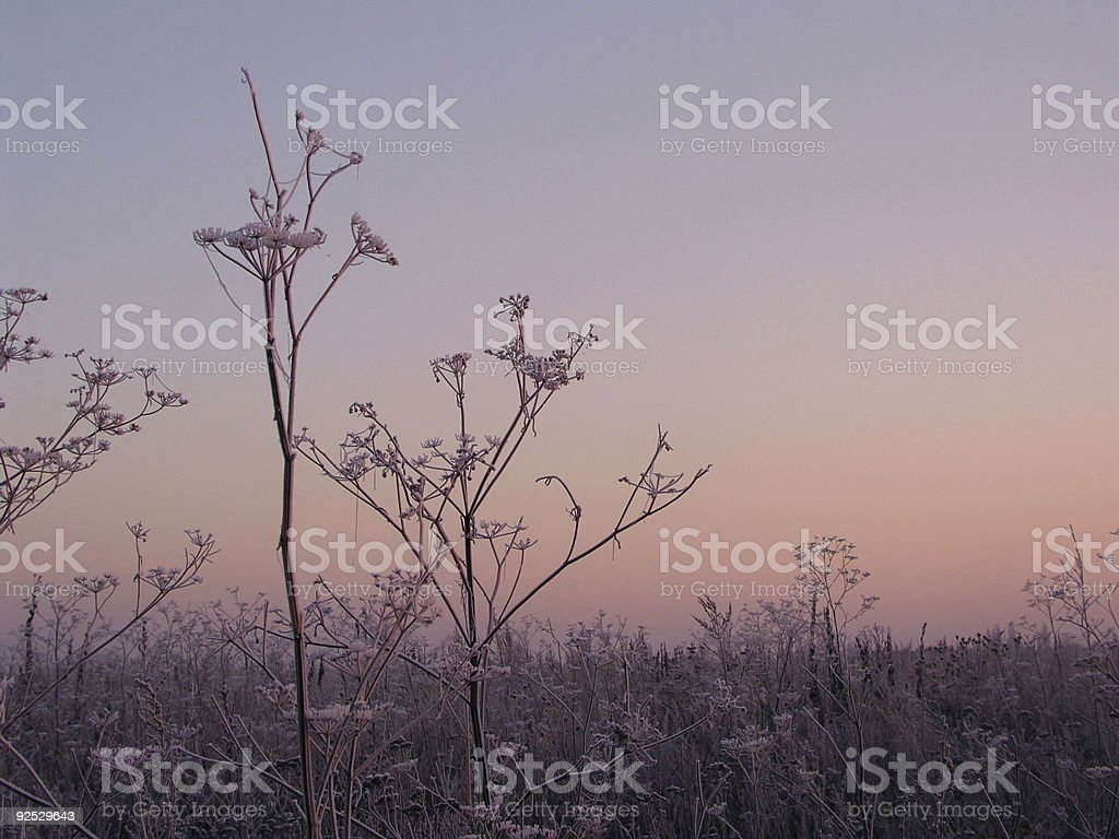 Morning 1 royalty-free stock photo