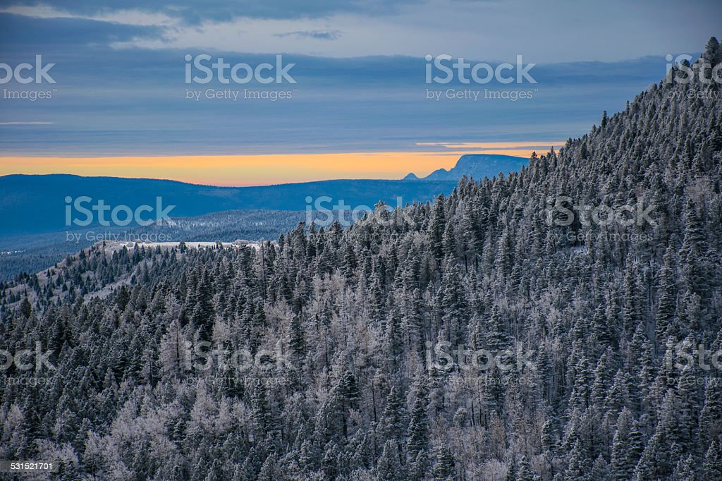 Morning After Snow Storm Karsen National Forest New Mexico stock photo