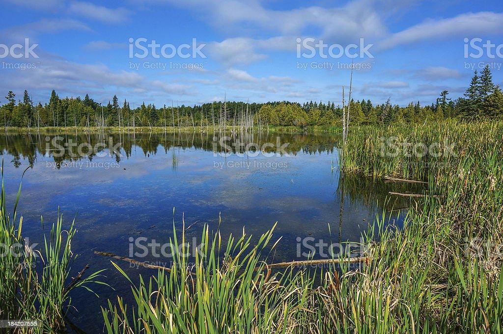 Morning at Stoney Swamp stock photo