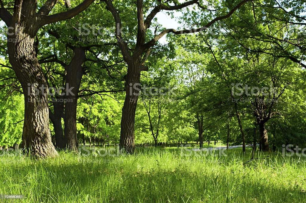 Morning at summer forest royalty-free stock photo