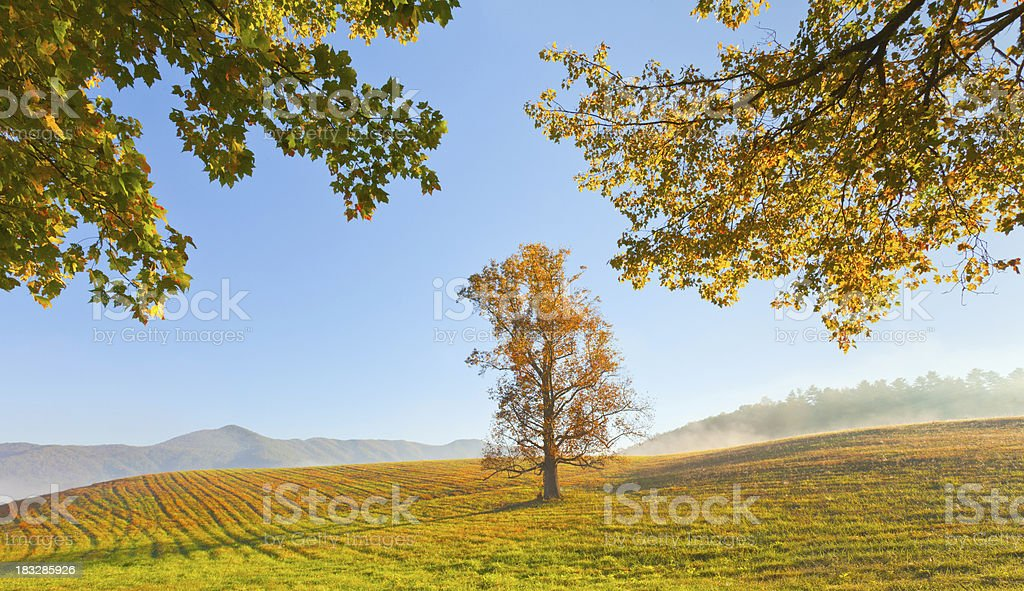Morning Autumn Field and Tree royalty-free stock photo
