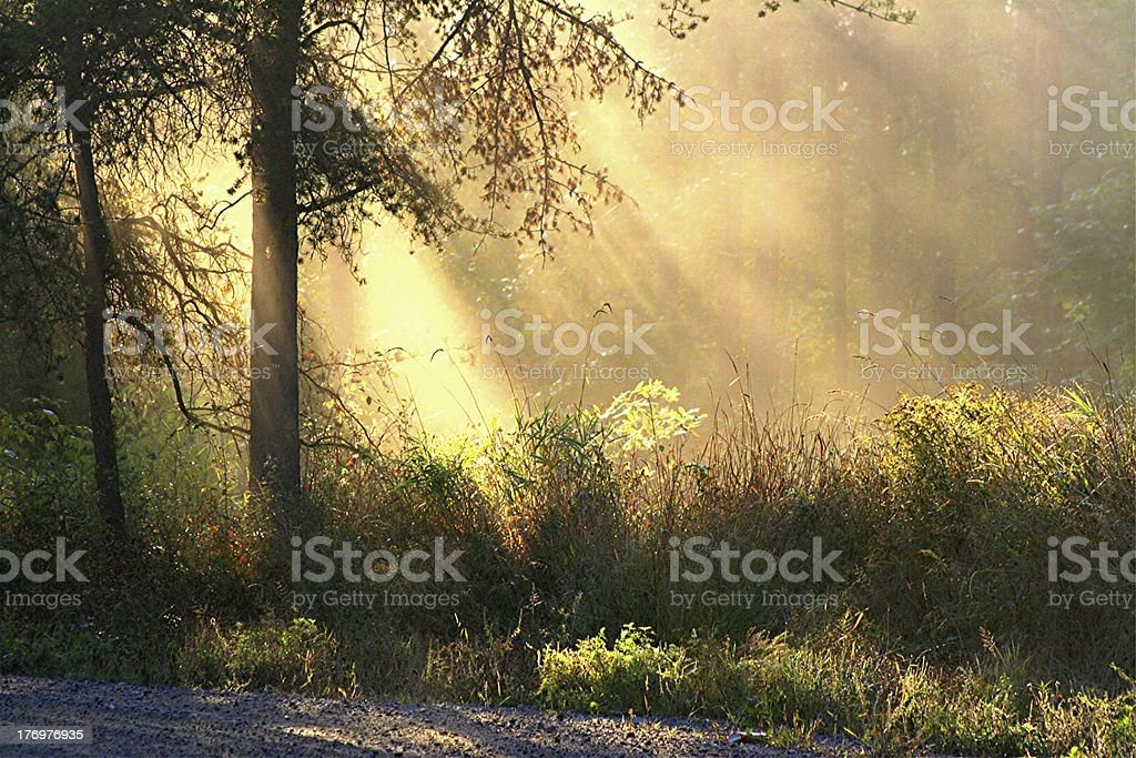 Morning Blessing royalty-free stock photo