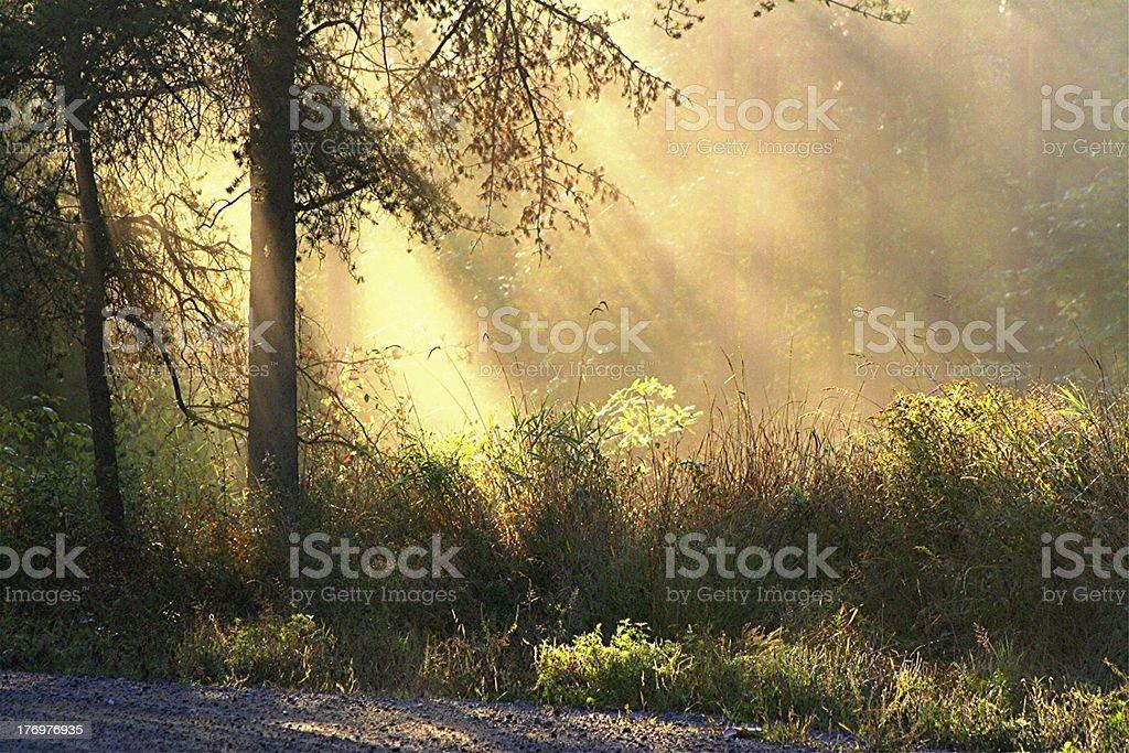 Morning Blessing stock photo