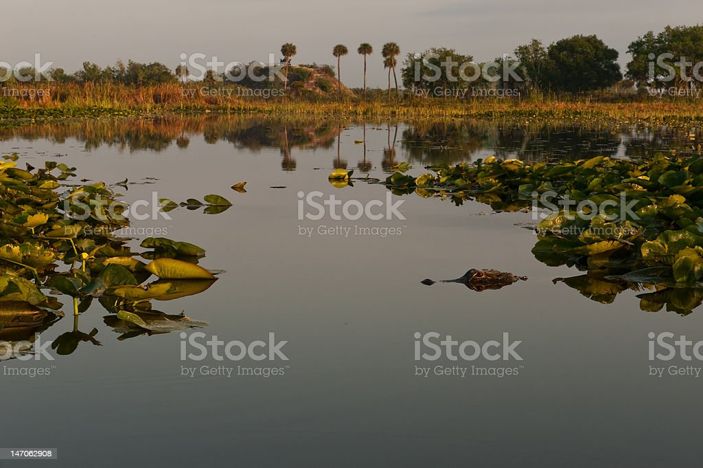 Morning calm with surprise stock photo
