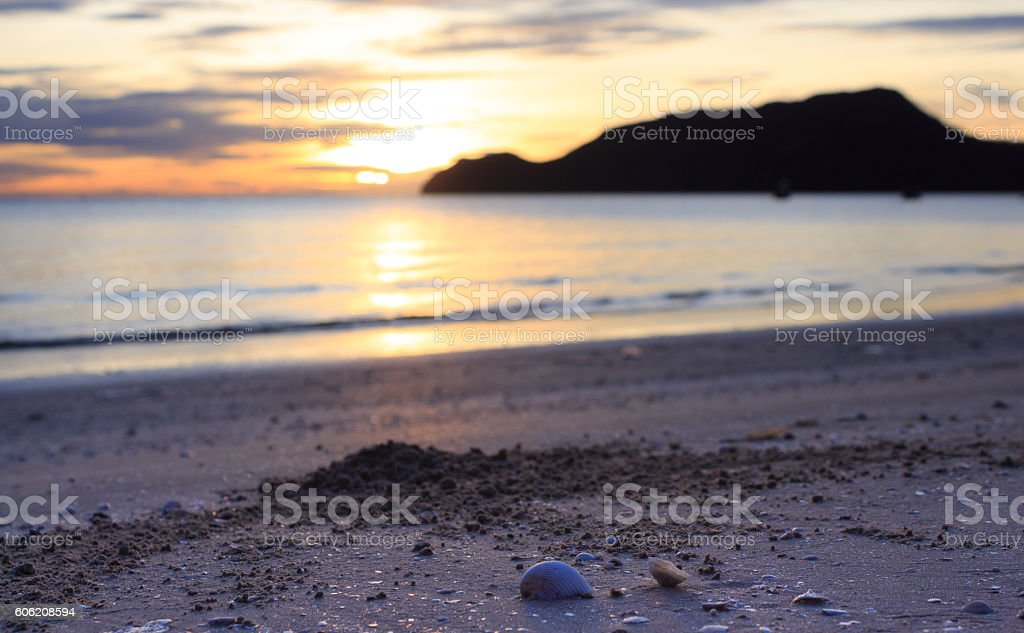 morning clearly yellow warm sunset shells and sea  water surface Стоковые фото Стоковая фотография