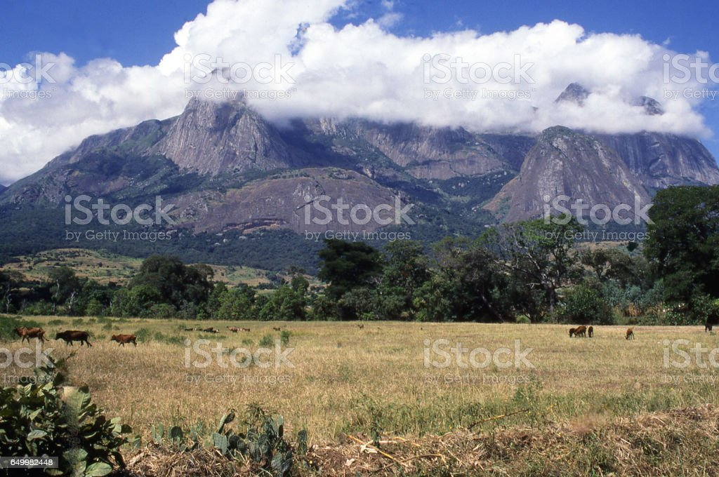 Morning clouds clearing over Mulanje Massif and cattle in fields below southern Malawi Africa stock photo