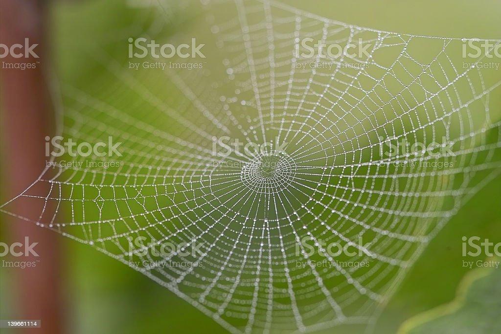 Morning cobweb royalty-free stock photo
