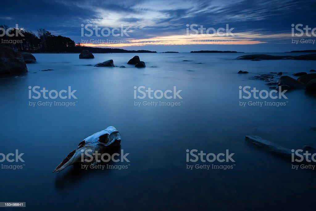 Morning dawn and skull stock photo
