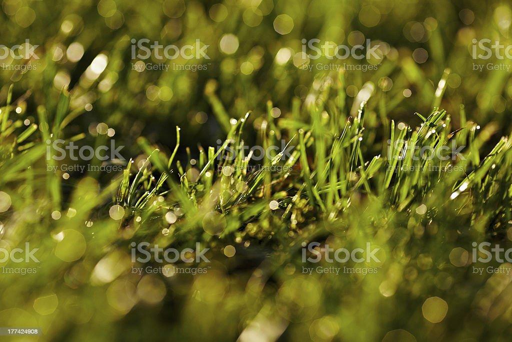 Morning dew su un erba. foto stock royalty-free