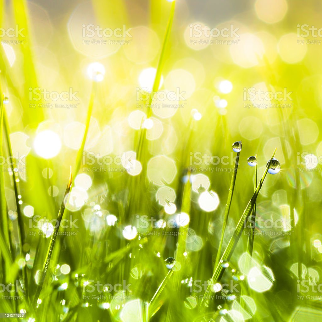 Morning dew on blades of grass during sunrise stock photo