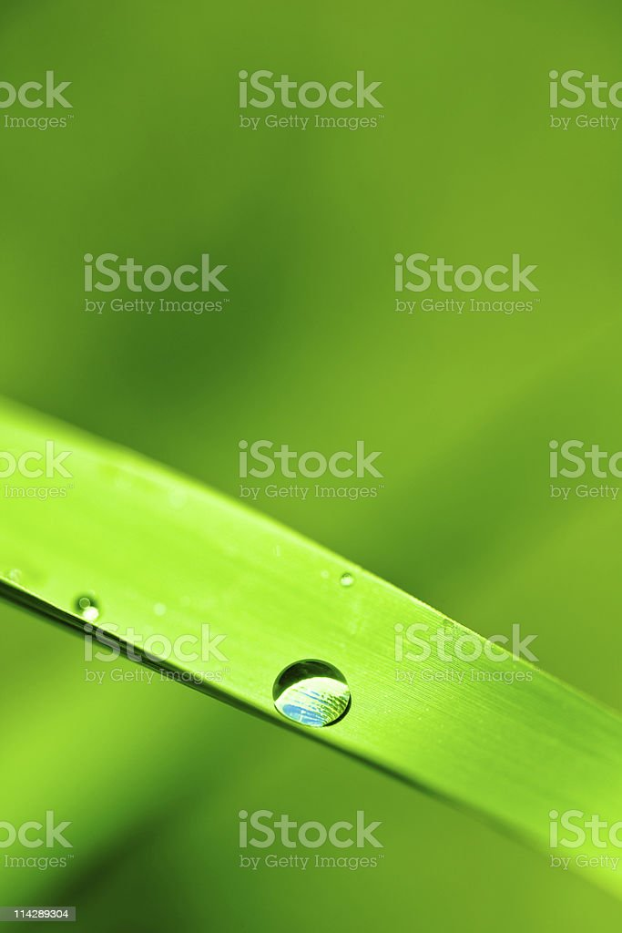 Morning Dew on grass royalty-free stock photo