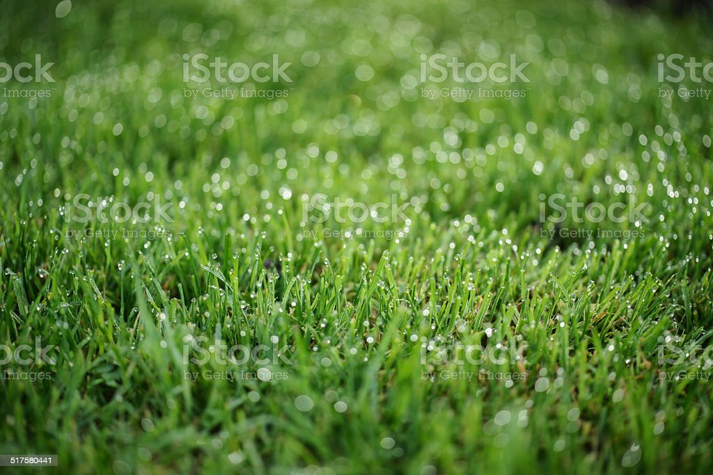 Morning Dew On Grass stock photo