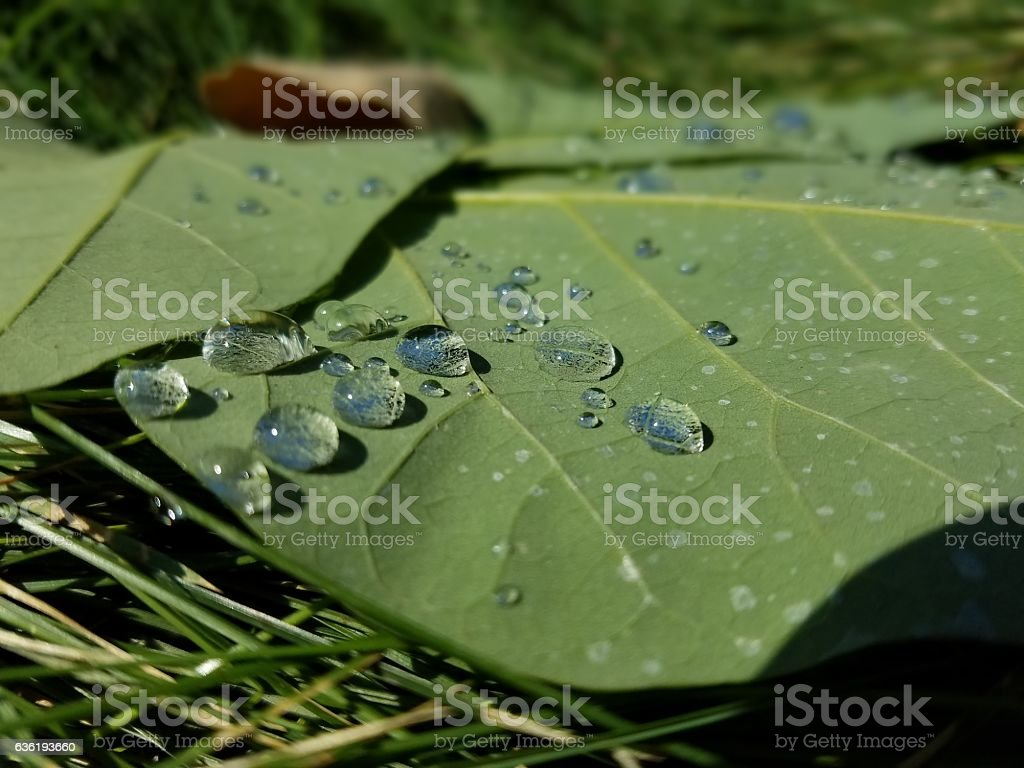 Morning Dew on Leaves on the Grass Floor stock photo