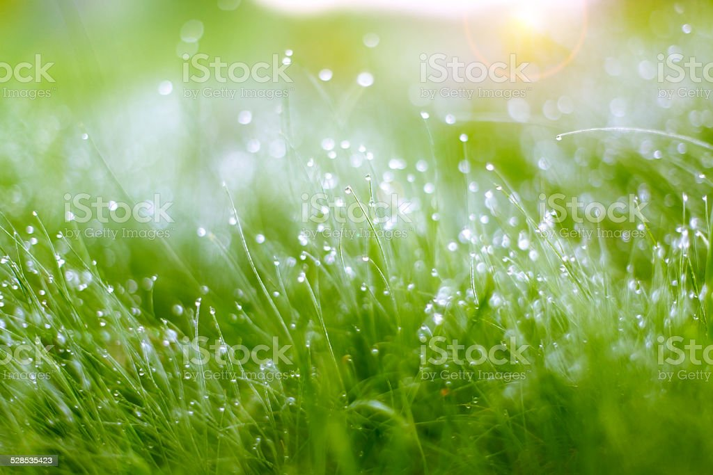 Morning dew royalty-free stock photo