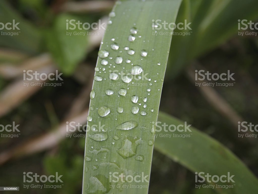 morning dew #2 royalty-free stock photo