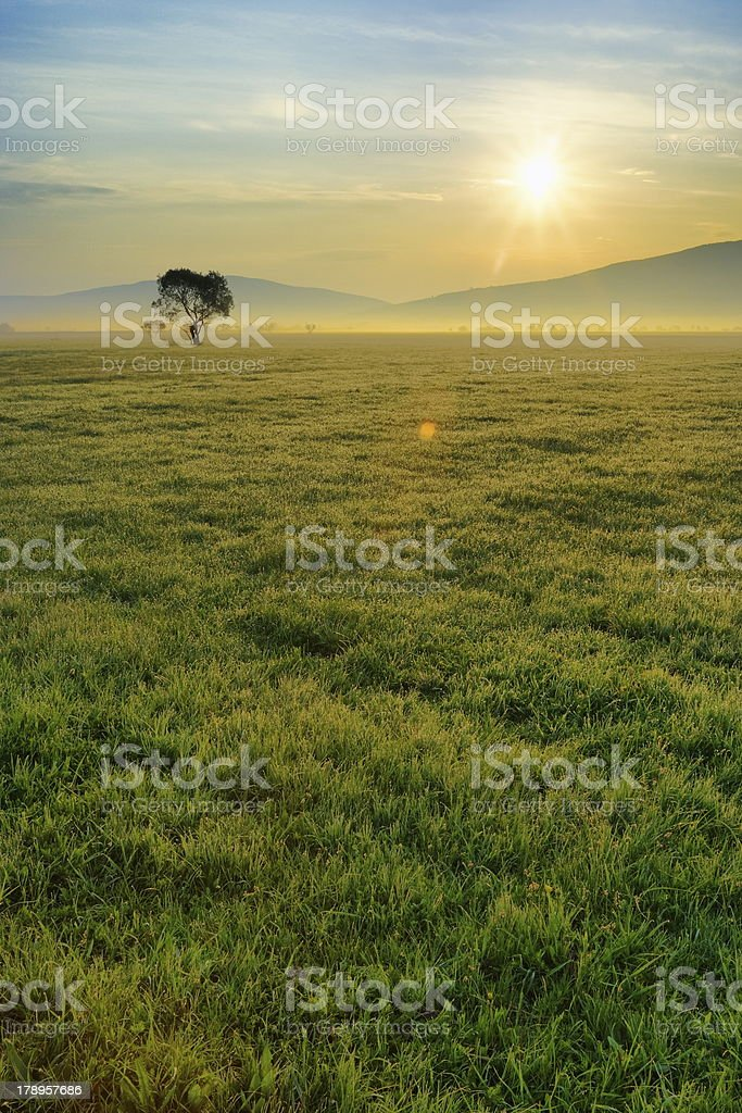 Morning field royalty-free stock photo