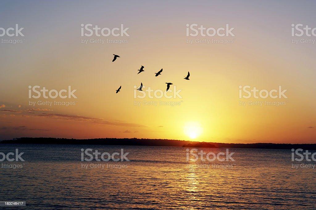 Morning Flight royalty-free stock photo