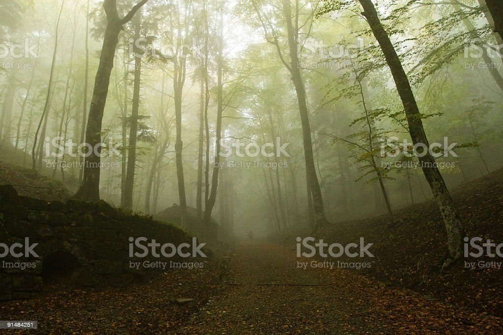 Morning fog in a beech forest, early Autumn stock photo