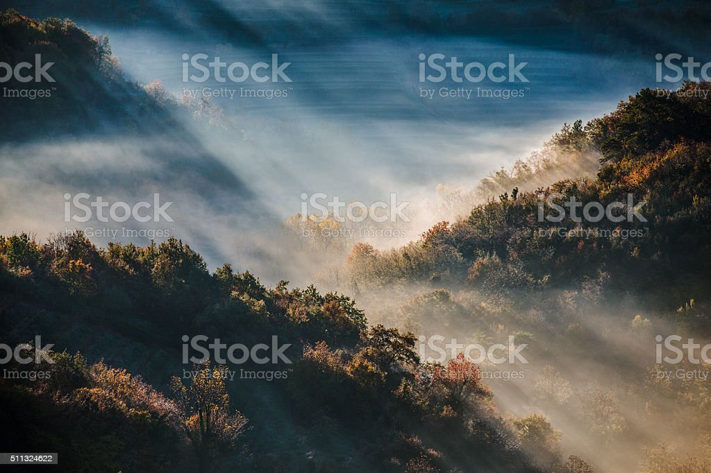 Morning Fog in Forest and Vineyards, Close-up stock photo