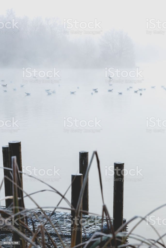 Morning fog in park. Clear winter air. Saturated tones stock photo