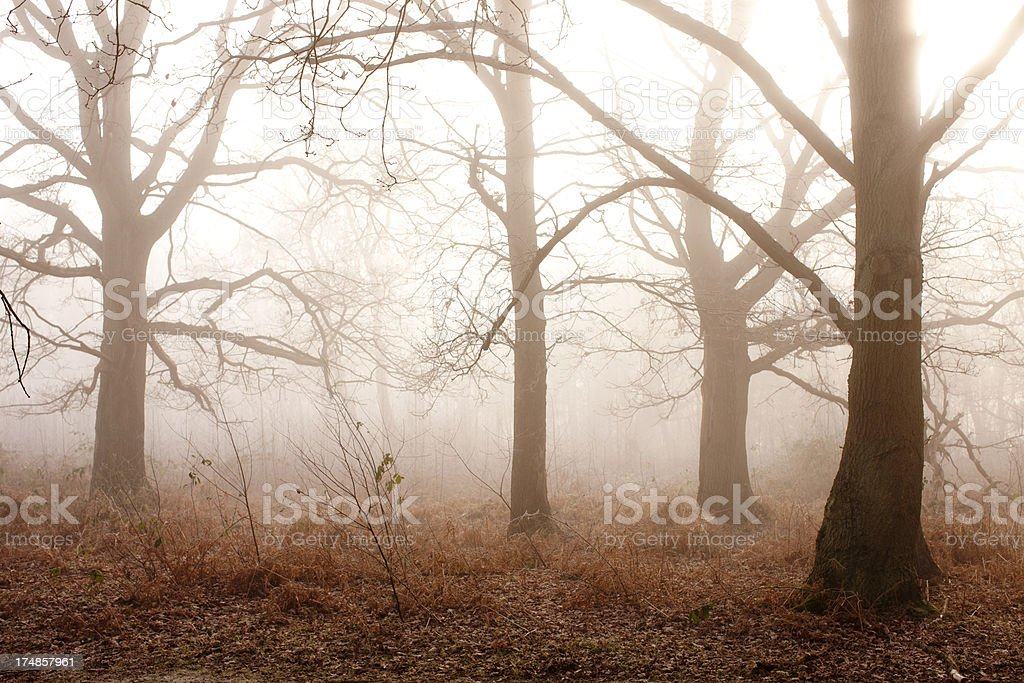 Morning Fog in Woodland Setting royalty-free stock photo