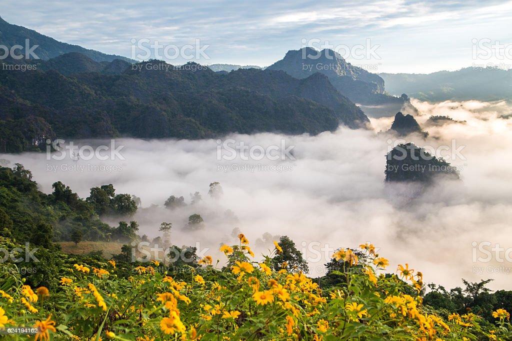 Morning fog on sunrise in the Phulanka stock photo