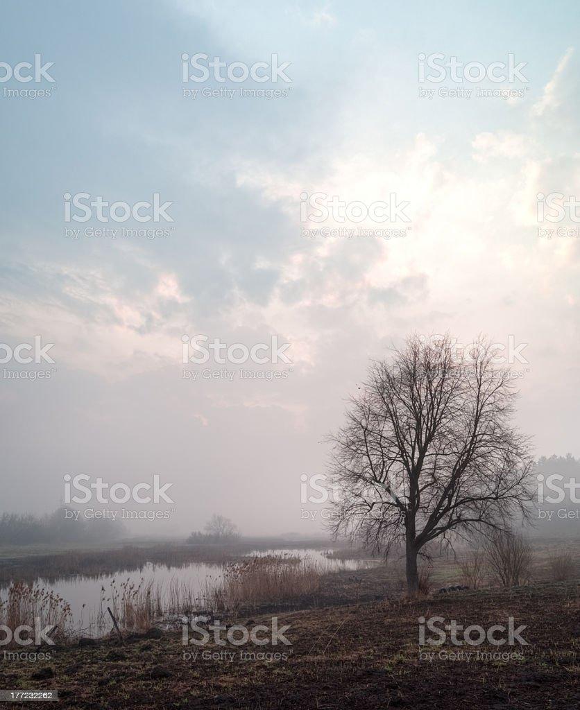 Morning fog. royalty-free stock photo