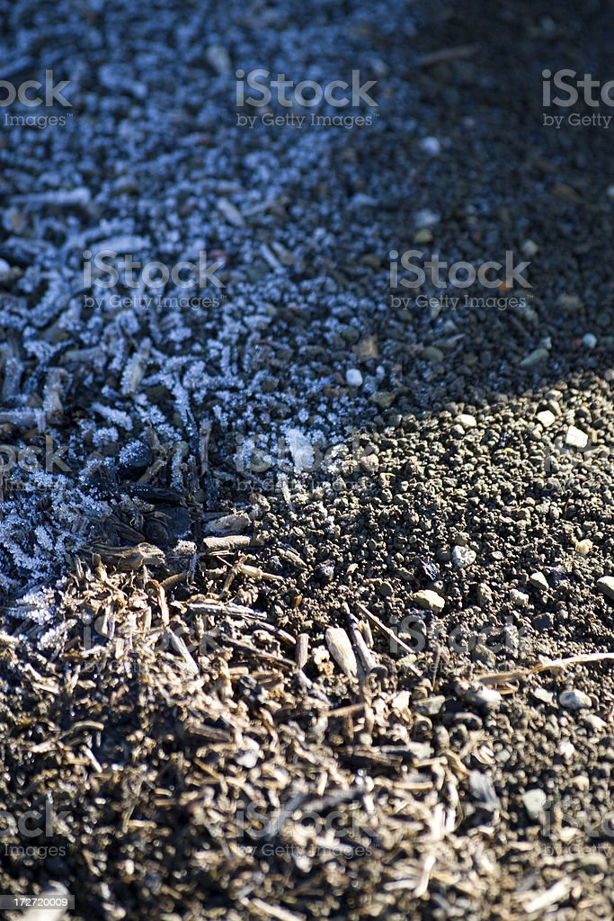 Morning frost royalty-free stock photo