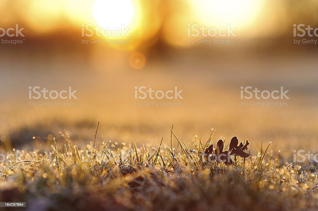 Morning Glory - Spring Sunrise royalty-free stock photo